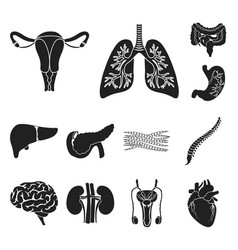 internal organs of a human black icons in set vector image
