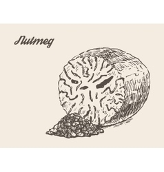 Nutmeg vintage hand drawn vector