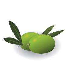 Olives isolated vector