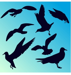 Seagull silhouettes vector
