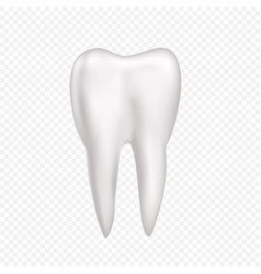 tooth on transparent background vector image