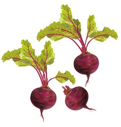 Vegetable beet isolated on white background vector image vector image