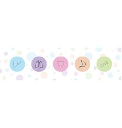 5 anatomy icons vector
