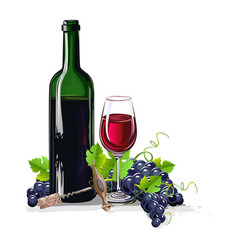 Bottle of wine with bunches of grapes vector