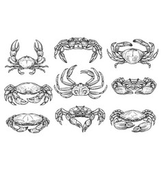 crustacean marine crab animal sketches vector image