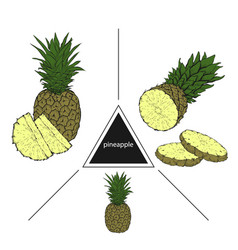 set of tropical fruits pineapple pineapple slices vector image