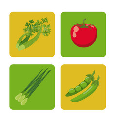 Set vegetables fresh harvest healthy image vector