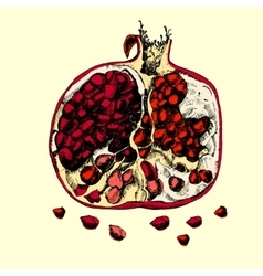 Beautiful juicy pomegranate vector