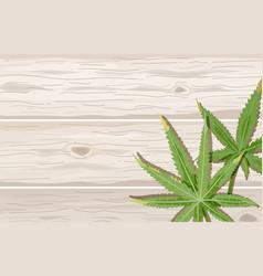 Cannabis leaves on wood background hemp leaf on vector