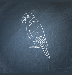 Lory parrot icon sketch on chalkboard vector