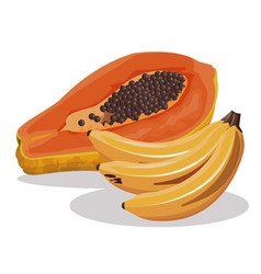 Papaya and banana fruit fresh harvest vector