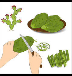 Prickly pear cactus paddles in human hand with a vector