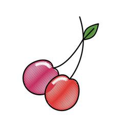 cherry fruit food vector image vector image