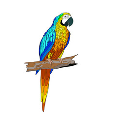 sitting on a branch parrot vector image vector image