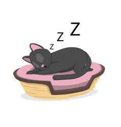 a cat is sleeping in a basket vector image