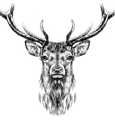 deer sketchy hand-drawn portrait vector image