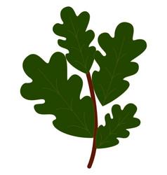 oak leaves on white background vector image