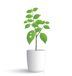 Plant in white pot vector image