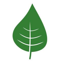 Plant leaf flat icon vector