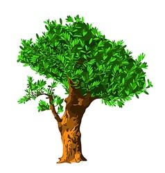oliva tree vector image