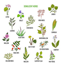 demulcent herbs hand drawn set vector image
