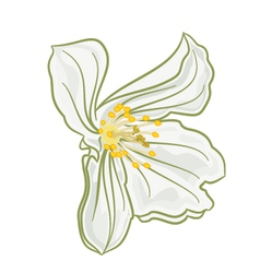Flower white jasmine Isolated on a white vector