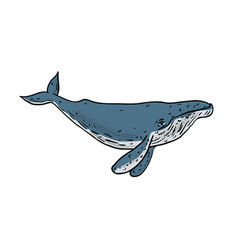 Humpback whale color drawing vector