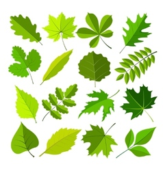 spring leaves flat style set vector image