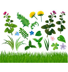 Herbs and wild flowers set isolated on white vector