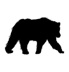 animal wild bear natural fauna pictogram vector image