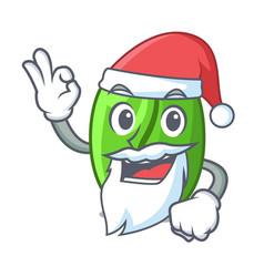Santa green coffee beans isolated on mascot vector