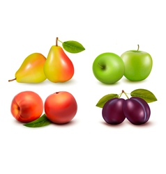 Set of fresh fruit vector image