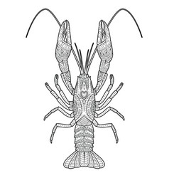 Hand drawn zentangle crawfish drawing for vector