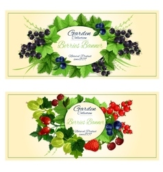 Fresh berries and fruits banners for food design vector image