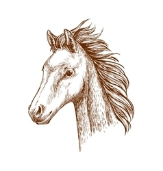 Brown horse pencil sketch portrait vector