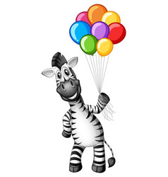 Cute zebra holding colorful balloons vector