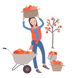 Female farmer gathering apples in basket vector