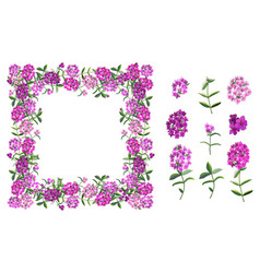 Flower set with different phloxes on white vector