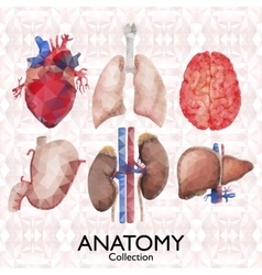 Watercolor organs pattern vector image
