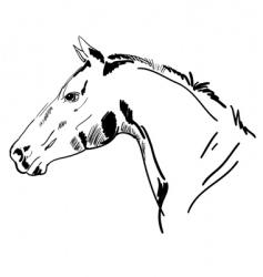 stallion sketch vector image vector image