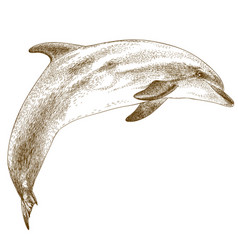 Engraving of dolphin vector