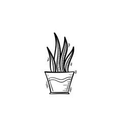 sansevieria trifasciata hand drawn sketch icon vector image