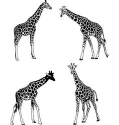 Giraffes sketch set vector