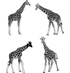 giraffes sketch set vector image