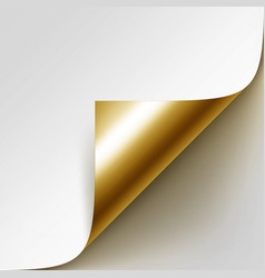 curled golden corner of paper with shadow vector image vector image