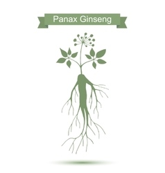 Ginseng Isolated plant on white background vector image