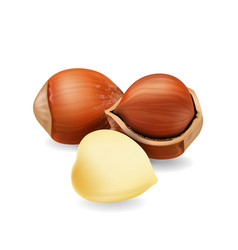 hazelnuts isolated realistic icon vector image