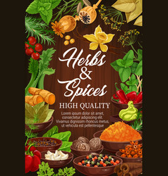 Herbs and spices organic seasonings vector