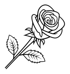 rose sketch 005 vector image