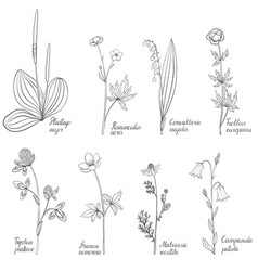 Set of drawing flowers and plants vector